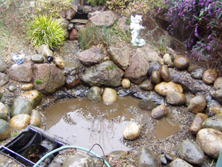 Before cleaning pond
