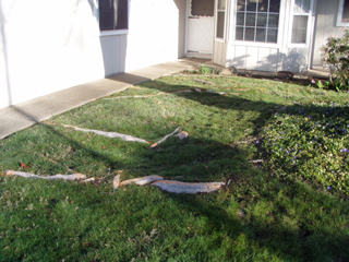 Before tree roots above the lawn