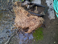 Small pond cleaning example